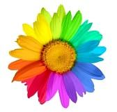 9442735-multicolored-flower
